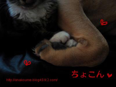 アナベラ/小梅14
