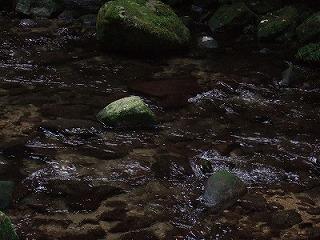 2008_1031熊野古道ヨーガ・リトリート0022