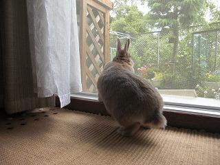 窓の外見るdeka