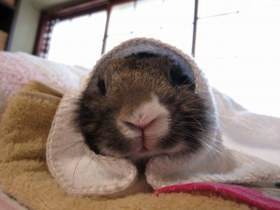 お耳が冷えたので まるっと包んでみました。