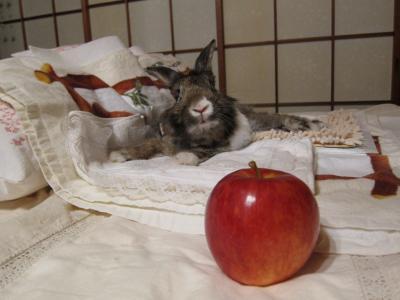 ポワ~ン.。o☆*:゚ と りんごの いい香り。