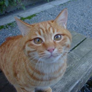 cats_0005.jpg