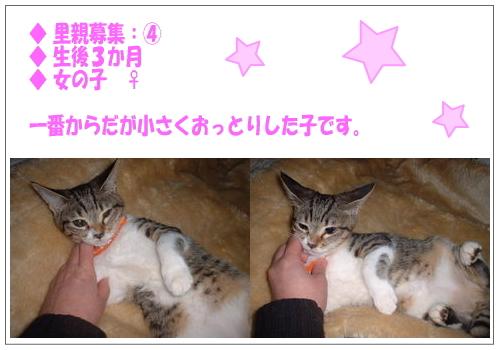 koneko4.jpg
