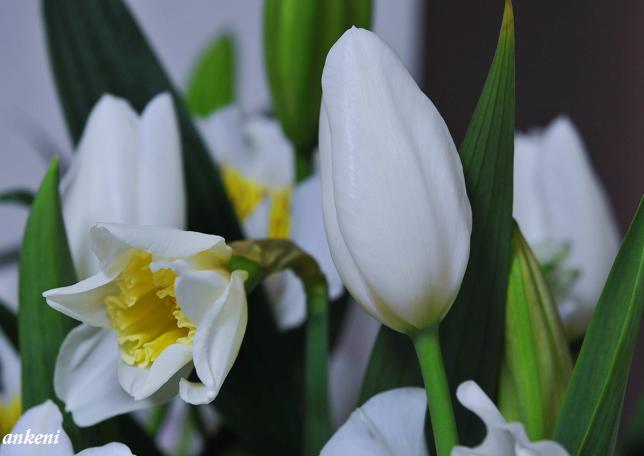 110208 058  お花