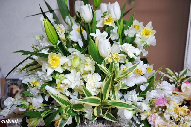 110208 175  お花