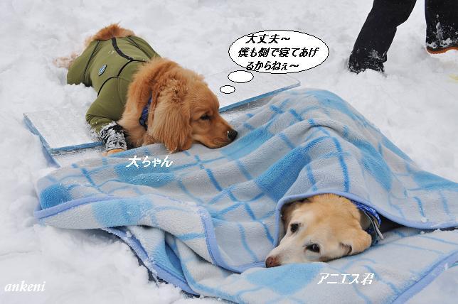 110213 201  大ちゃん&アニエス君