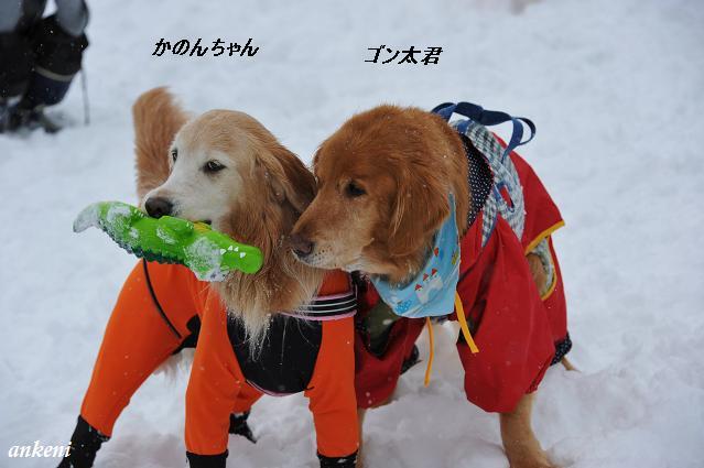 110213 455  かのんちゃん&ゴン太君