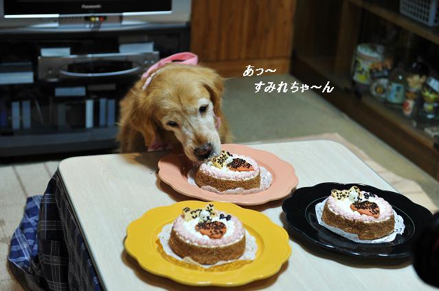 すみれちゃん110213 1141