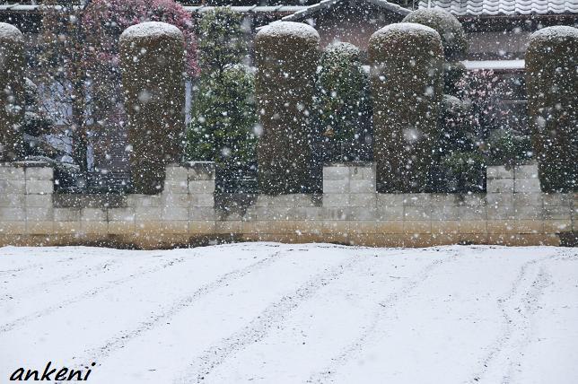 110307 021  雪景色
