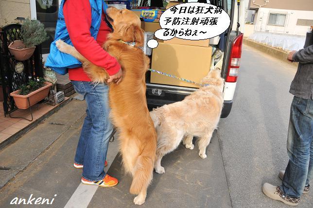 2011.04.08 014  ケニー