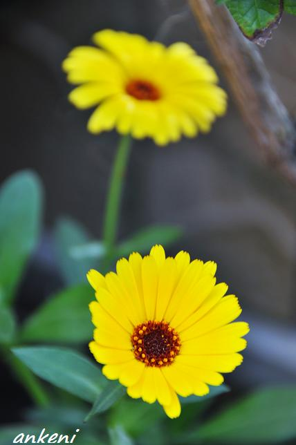 2011.04.16 080  花
