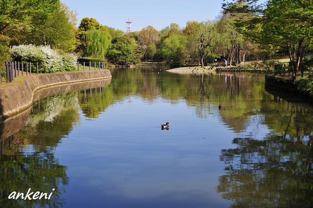 2011.04.07 093  草加公園