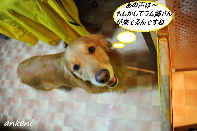 2011.04.22 125  ケニー