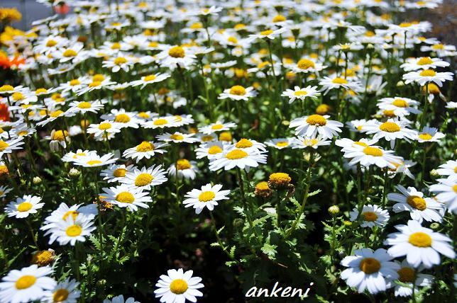 2011.04.24 056  花