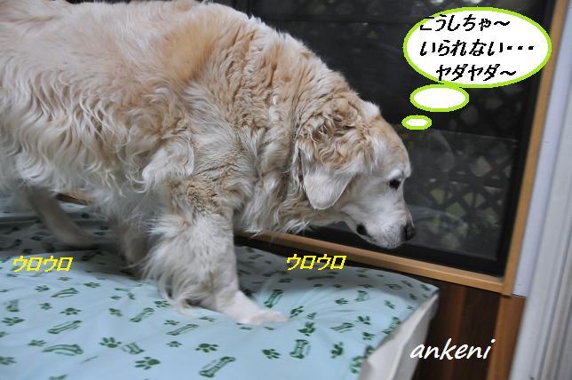 2011.04.25 071  アンディ