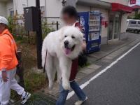 2011驥瑚ヲ狗・ュ繧・008_convert_20111005001328