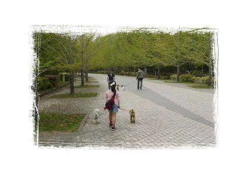 園内で散歩