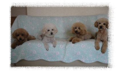 4頭ソファーで3