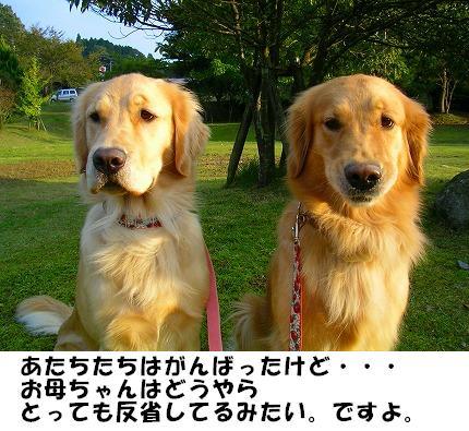 SANY0004_20081013134527.jpg