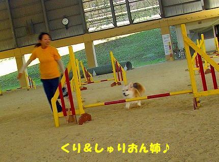 SANY0010_20081013134543.jpg