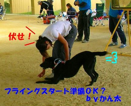 SANY0014_20081013134605.jpg