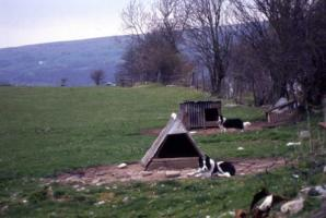 Wales牧場