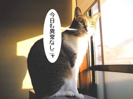 20060113140118.jpg