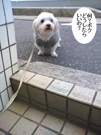 20060118221657.jpg