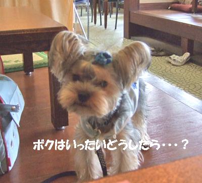 2007_0919220020.jpg