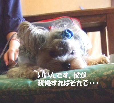 2007_0919220021.jpg
