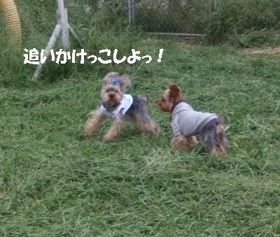 2007_0919220032.jpg