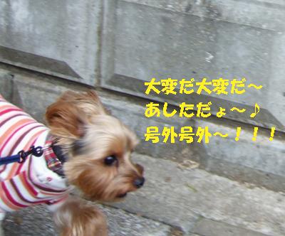 2007_1031220016.jpg