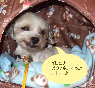 2007_1123220019.jpg