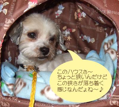 2007_1123220020.jpg