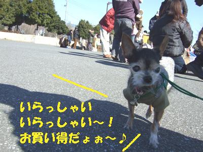 2008_0127220003.jpg