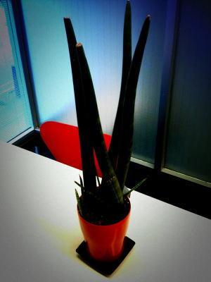 new plant1web