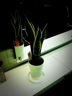new plant2web
