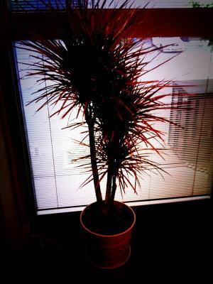 new plant4web
