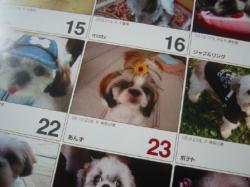 あんずカレンダー