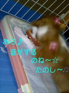 20080810132457.jpg