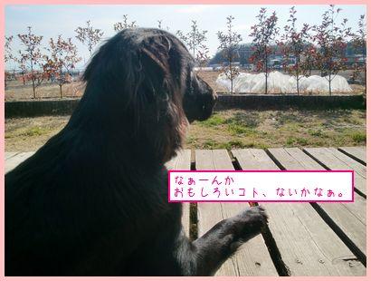 CIMG9482.jpg