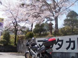 20090411shigarakisakura.jpg