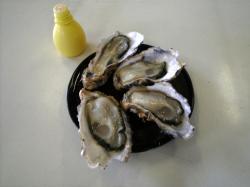中山かき養殖場 生牡蠣
