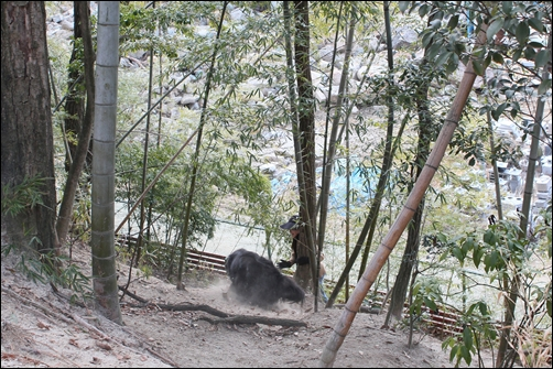 2011_0313inariyama0227a.jpg