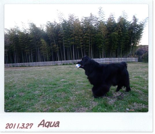 2011_0327hasi0020.jpg