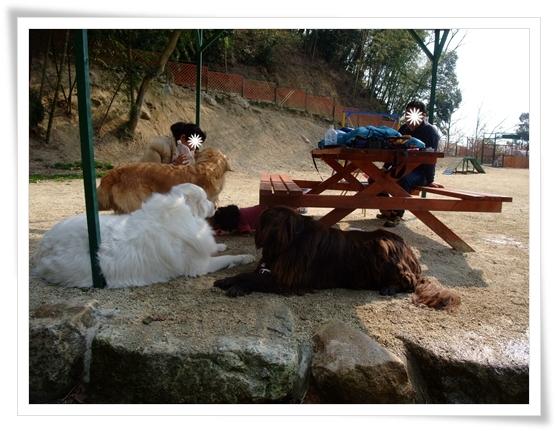 2011_0330nanohana0030.jpg