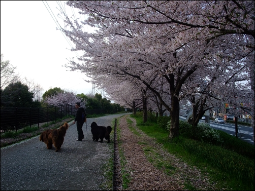 2011_0410hukakita0081.jpg