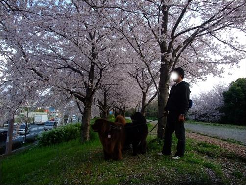 2011_0410hukakita0083.jpg