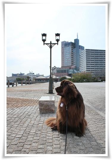 2011_0421ha-ba-rando0118.jpg