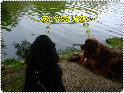 2011_0427pool2011040166.jpg